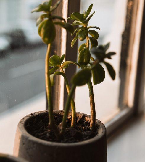 cây cảnh căn hộ